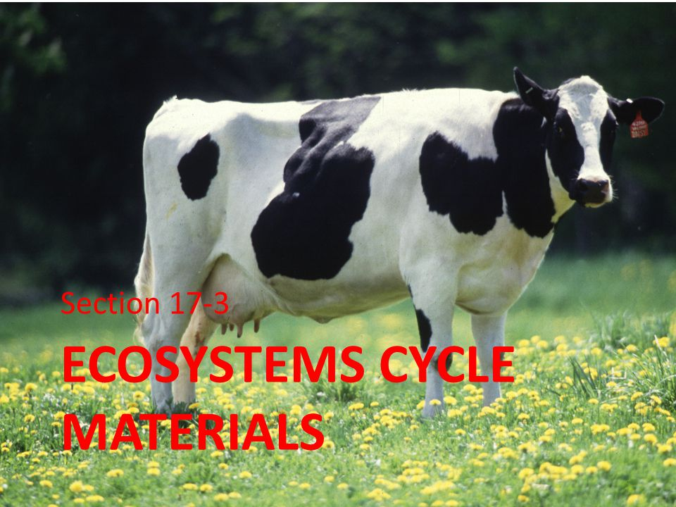 Ecosystems cycle materials
