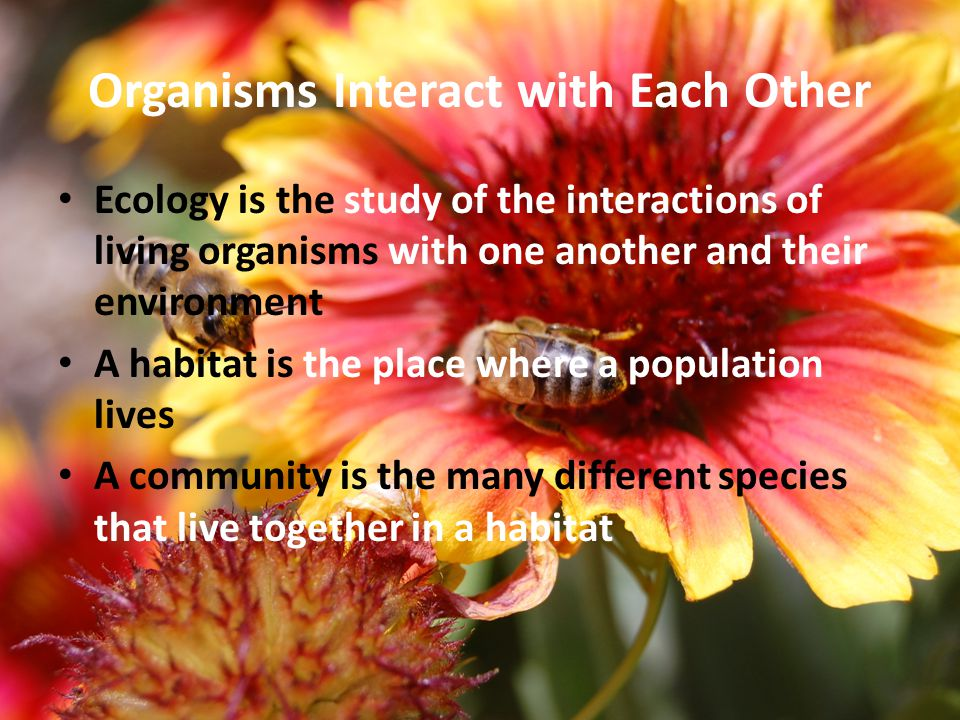 Organisms Interact with Each Other