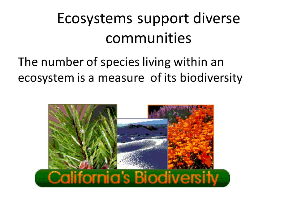 Ecosystems support diverse communities
