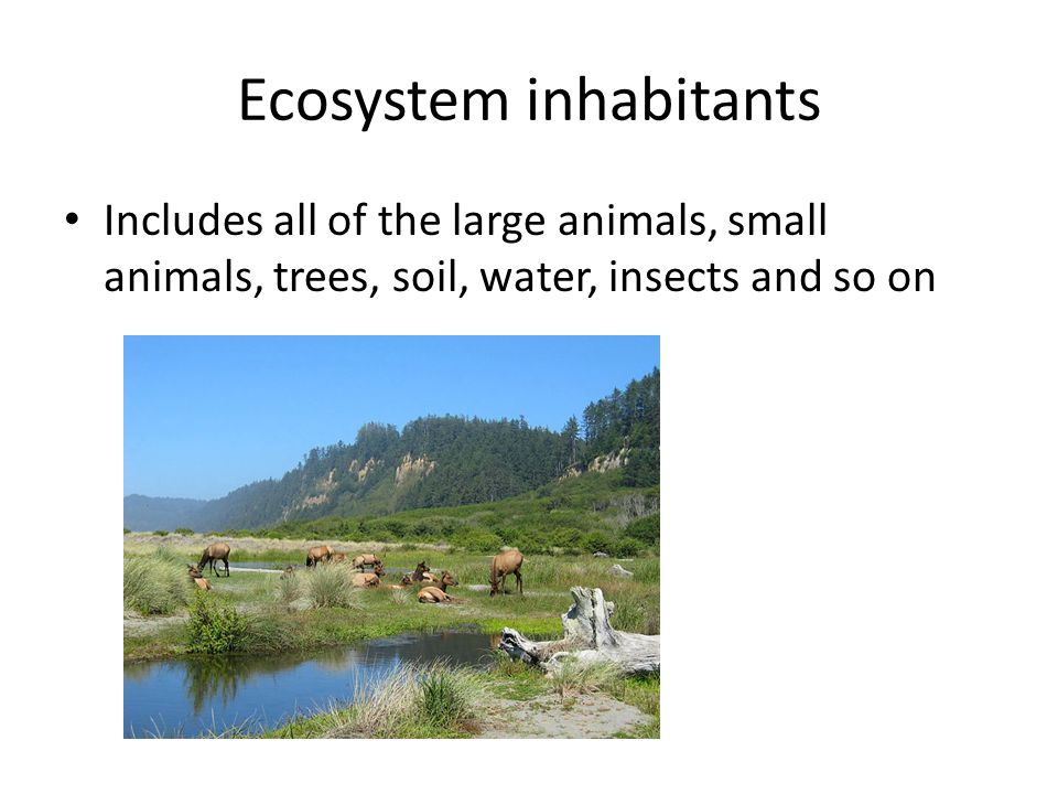 Ecosystem inhabitants