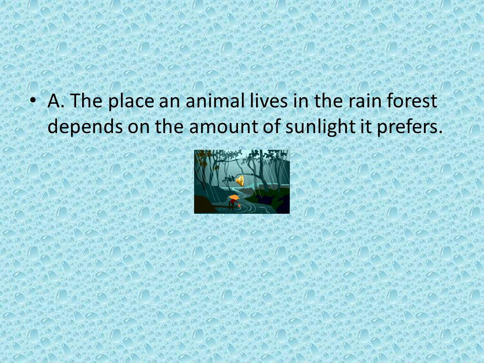 A. The place an animal lives in the rain forest depends on the amount of sunlight it prefers.