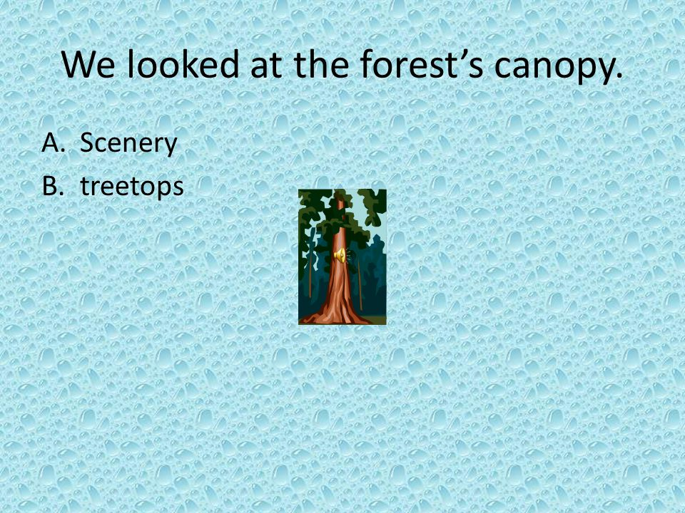 We looked at the forest's canopy.