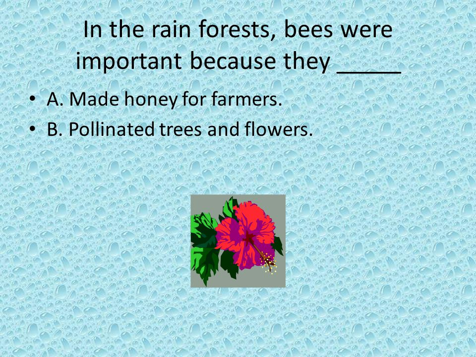 In the rain forests, bees were important because they _____