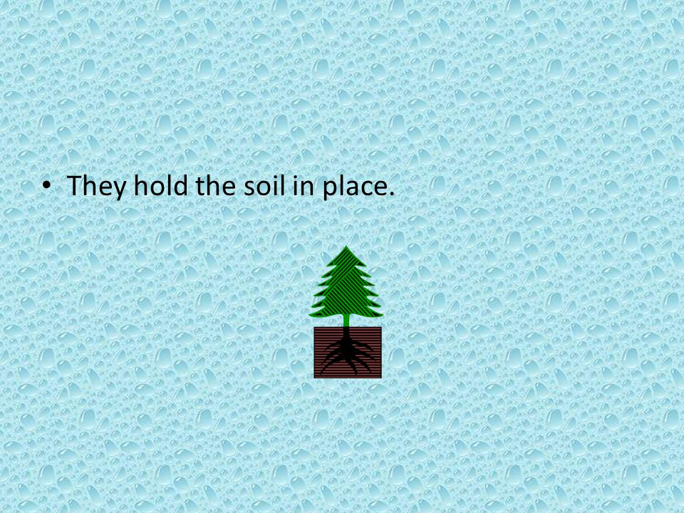 They hold the soil in place.