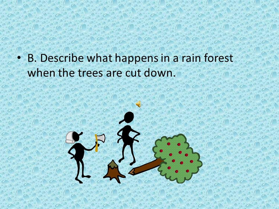 B. Describe what happens in a rain forest when the trees are cut down.