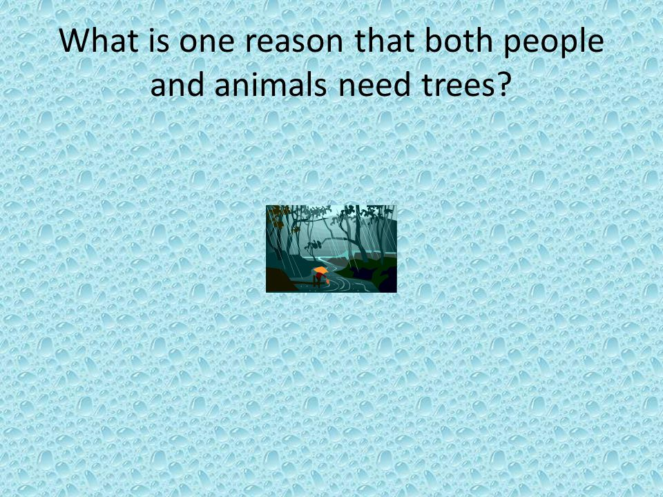 What is one reason that both people and animals need trees