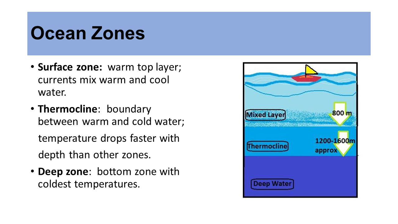 Ocean Zones Surface zone: warm top layer; currents mix warm and cool water. Thermocline: boundary between warm and cold water;
