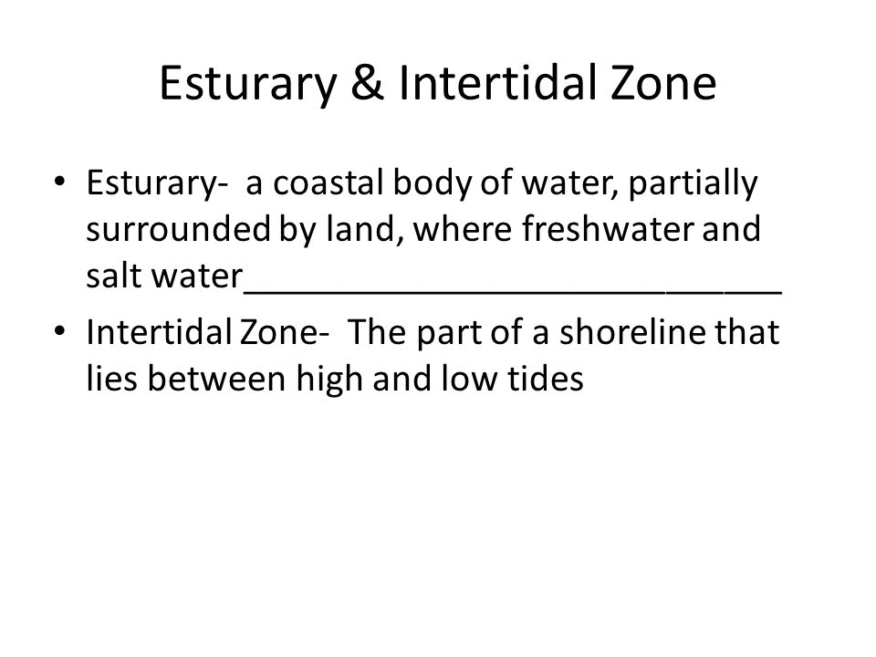 Esturary & Intertidal Zone