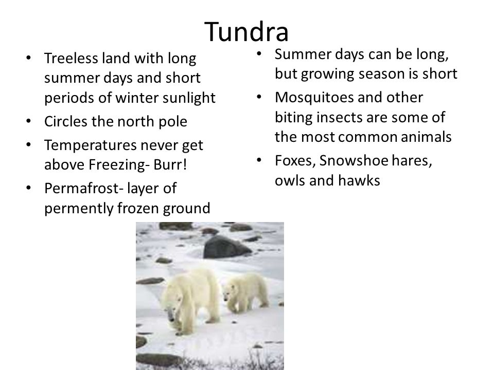 Tundra Summer days can be long, but growing season is short