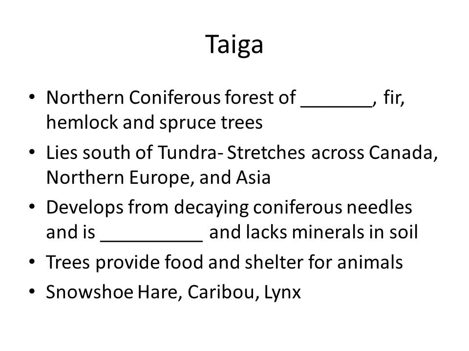 Taiga Northern Coniferous forest of _______, fir, hemlock and spruce trees. Lies south of Tundra- Stretches across Canada, Northern Europe, and Asia.