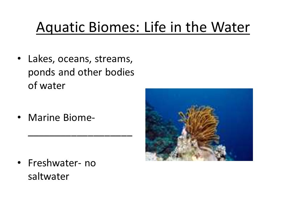 Aquatic Biomes: Life in the Water