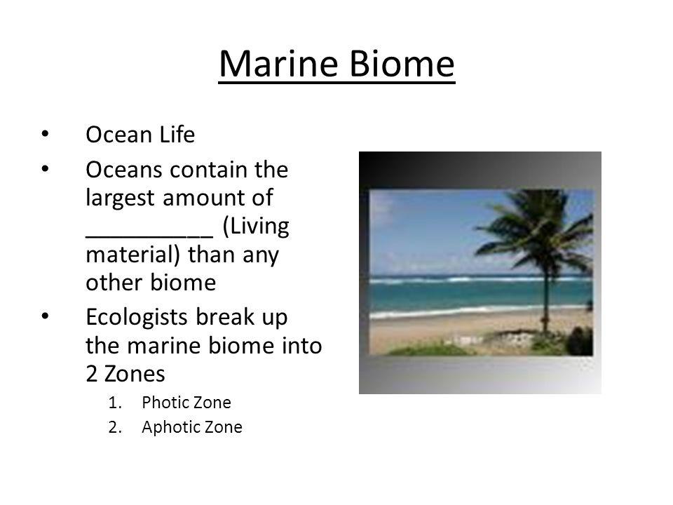 Marine Biome Ocean Life