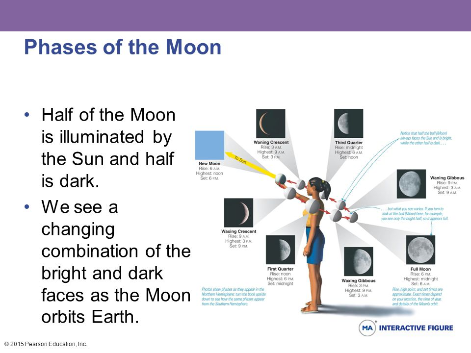 Phases of the Moon Half of the Moon is illuminated by the Sun and half is dark.