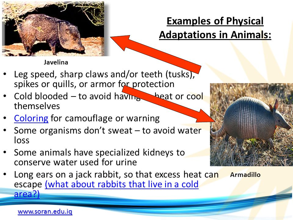 Examples of Physical Adaptations in Animals: