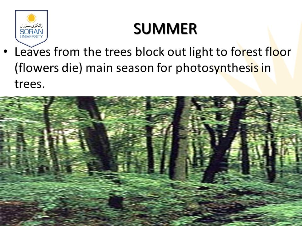 SUMMER Leaves from the trees block out light to forest floor (flowers die) main season for photosynthesis in trees.