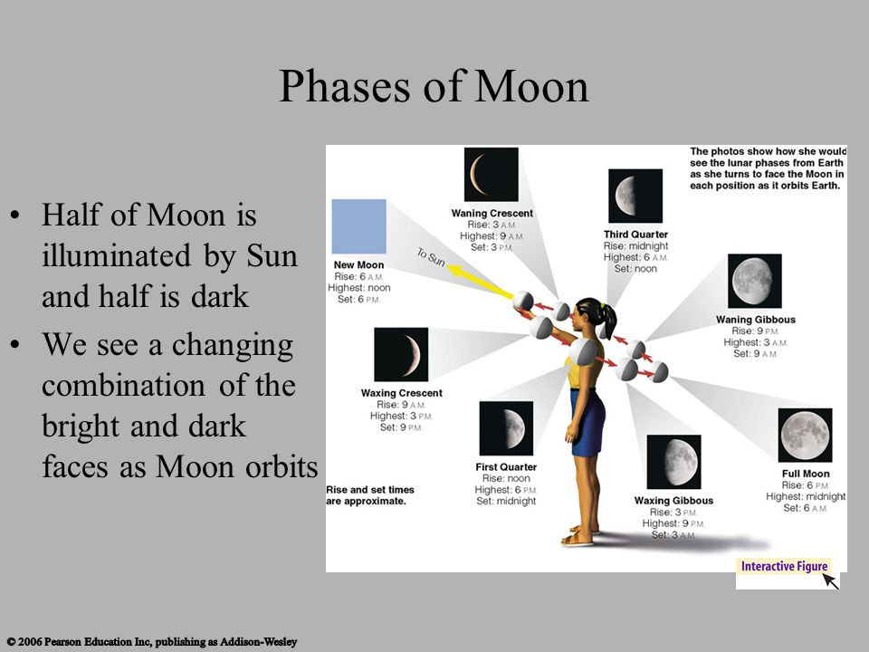 Phases of Moon Half of Moon is illuminated by Sun and half is dark