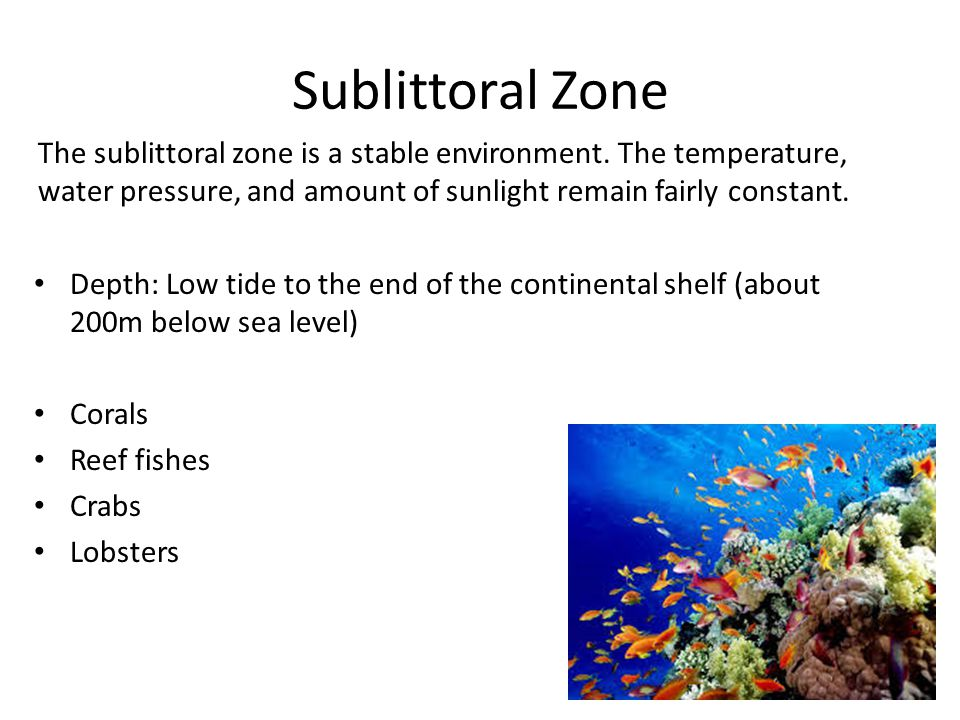 Sublittoral Zone The sublittoral zone is a stable environment. The temperature, water pressure, and amount of sunlight remain fairly constant.