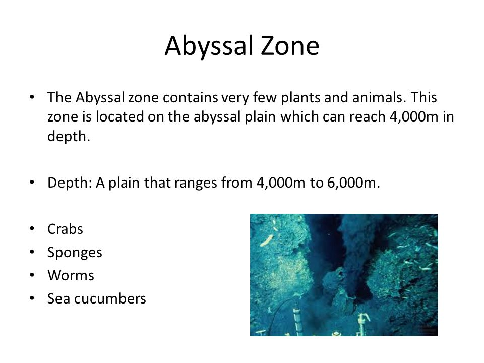 Abyssal Zone The Abyssal zone contains very few plants and animals. This zone is located on the abyssal plain which can reach 4,000m in depth.