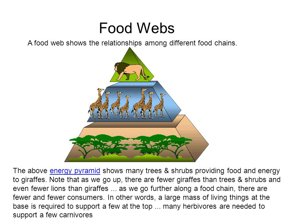 Food Webs A food web shows the relationships among different food chains.