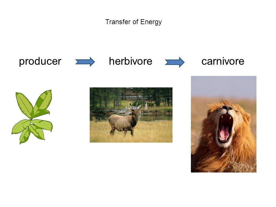 producer herbivore carnivore