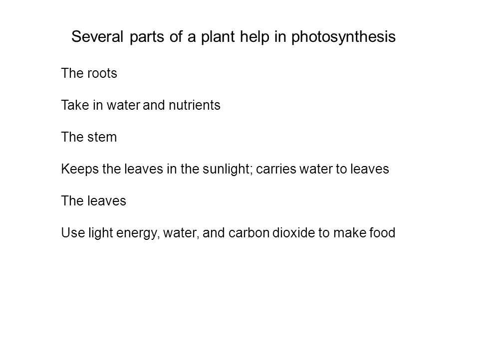 Several parts of a plant help in photosynthesis