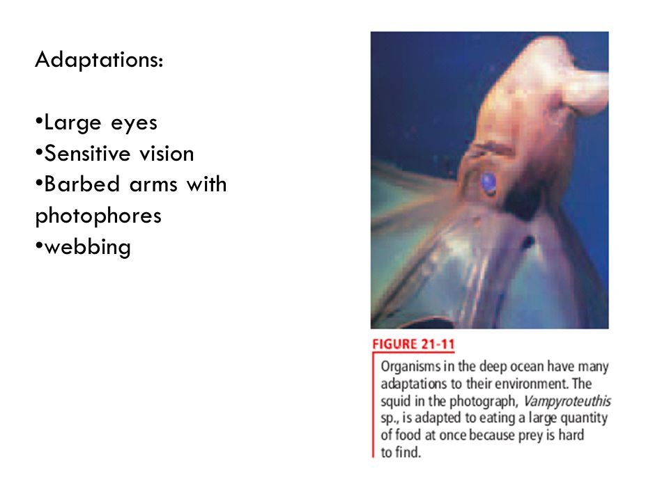 Adaptations: Large eyes Sensitive vision Barbed arms with photophores webbing