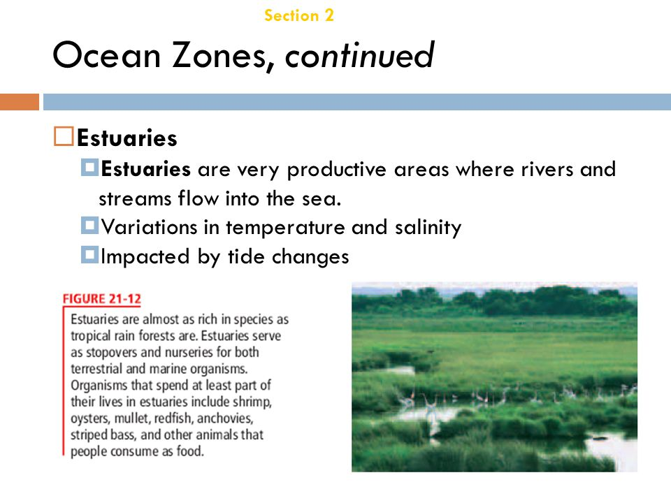 Ocean Zones, continued Estuaries Chapter 21