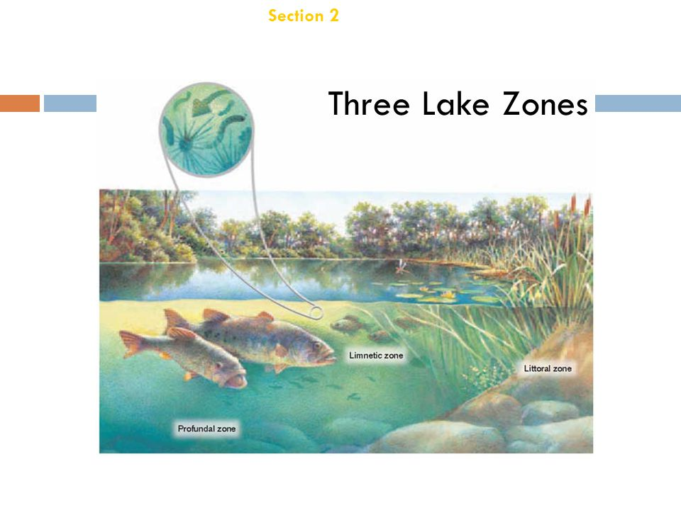 Section 2 Aquatic Ecosystems