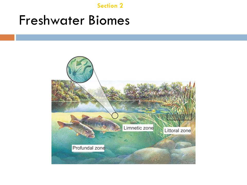 Section 2 Aquatic Ecosystems