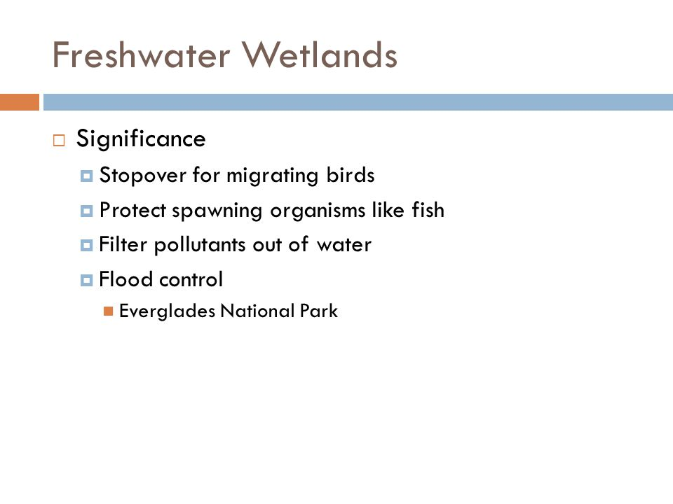 Freshwater Wetlands Significance Stopover for migrating birds