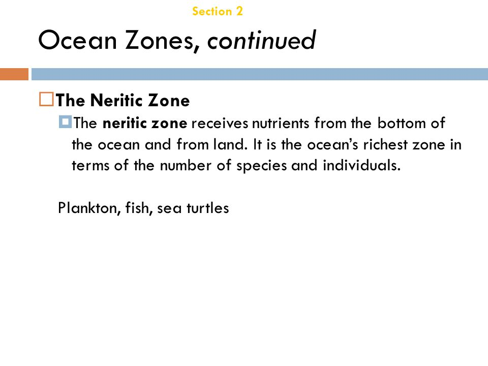 Ocean Zones, continued The Neritic Zone Chapter 21