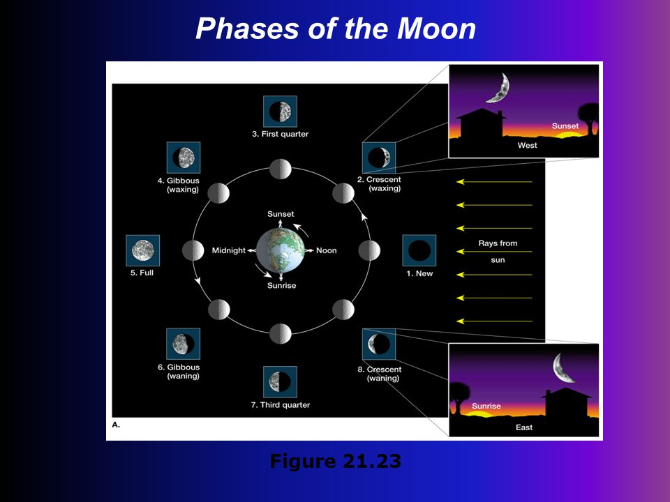 Phases of the Moon Figure 21.23