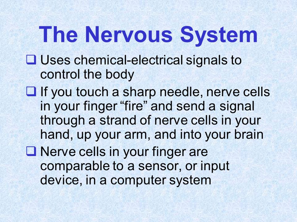 The Nervous System Uses chemical-electrical signals to control the body.