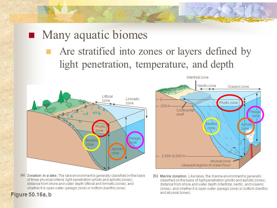 Many aquatic biomes Are stratified into zones or layers defined by light penetration, temperature, and depth.