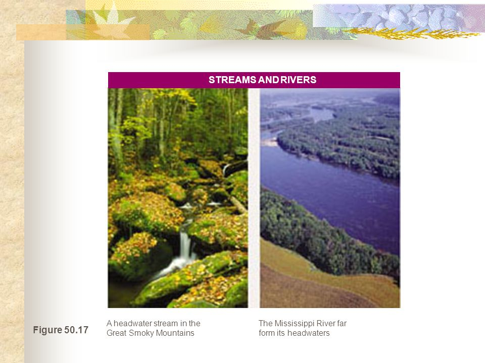 STREAMS AND RIVERS Figure 50.17
