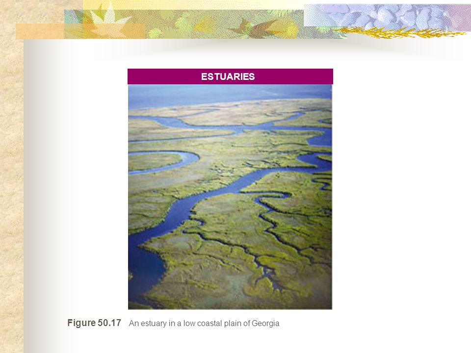 Figure 50.17 An estuary in a low coastal plain of Georgia ESTUARIES