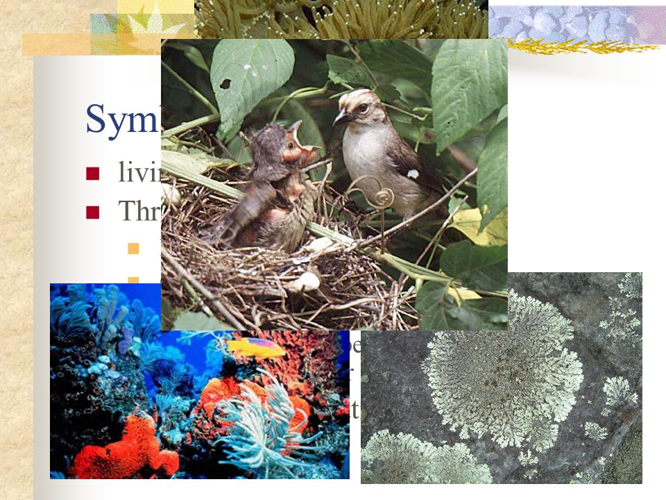 Symbiosis living together Three major kinds of symbiosis