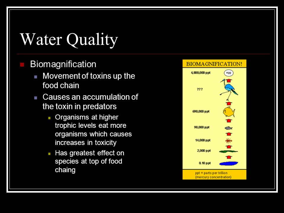 Water Quality Biomagnification Movement of toxins up the food chain