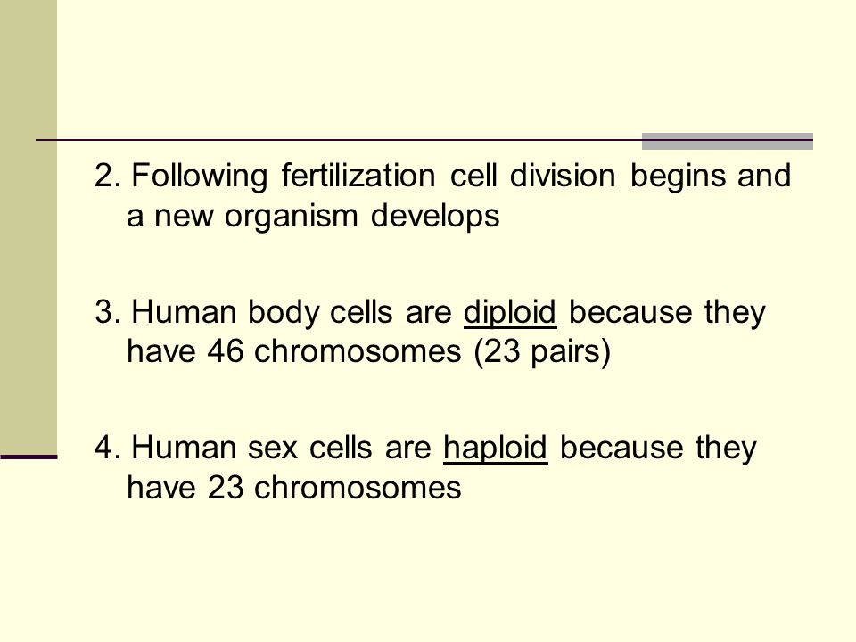 2. Following fertilization cell division begins and a new organism develops 3.