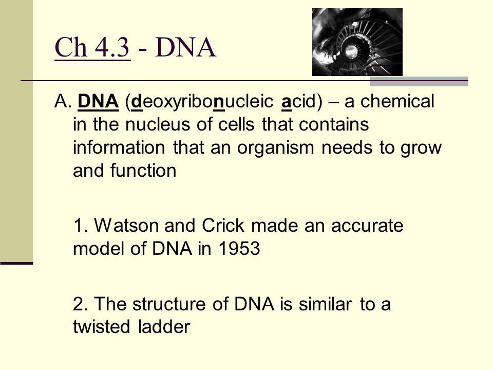 Ch 4.3 - DNA