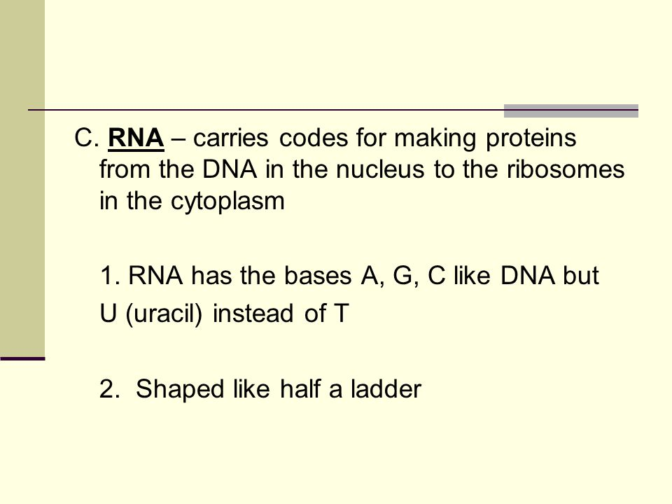 C. RNA – carries codes for making proteins from the DNA in the nucleus to the ribosomes in the cytoplasm
