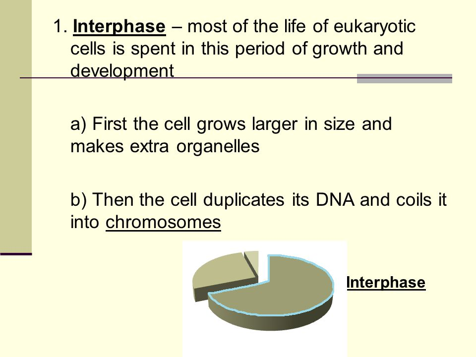a) First the cell grows larger in size and makes extra organelles
