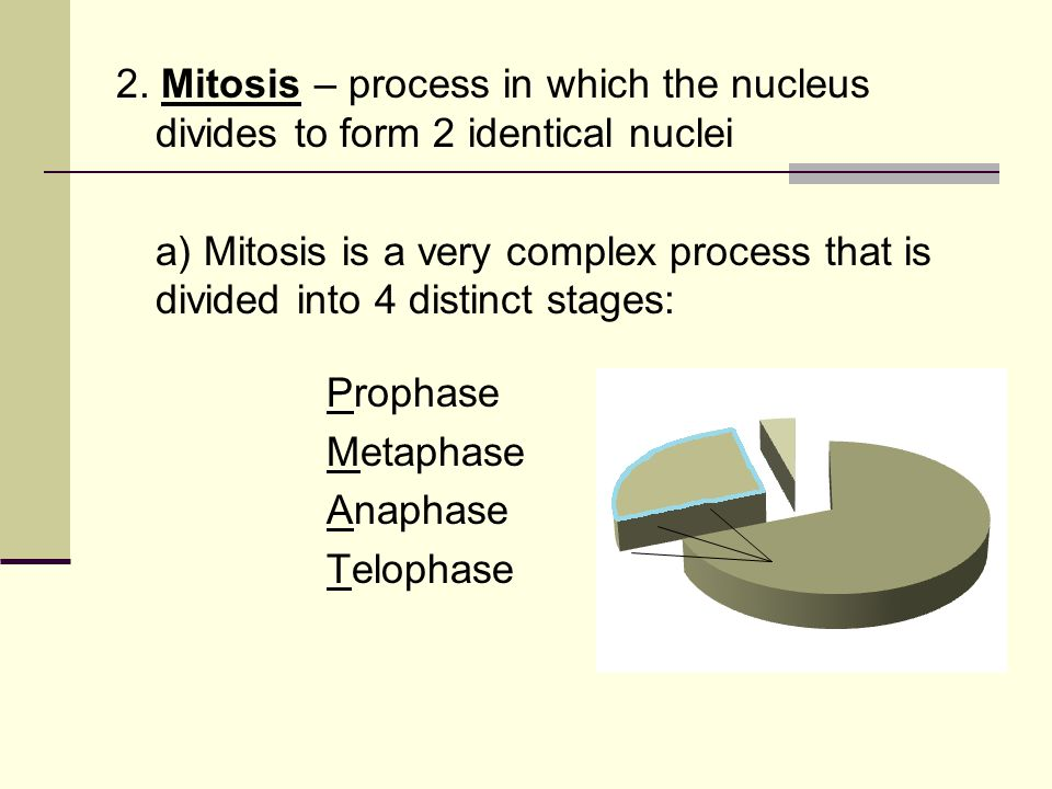 2. Mitosis – process in which the nucleus divides to form 2 identical nuclei