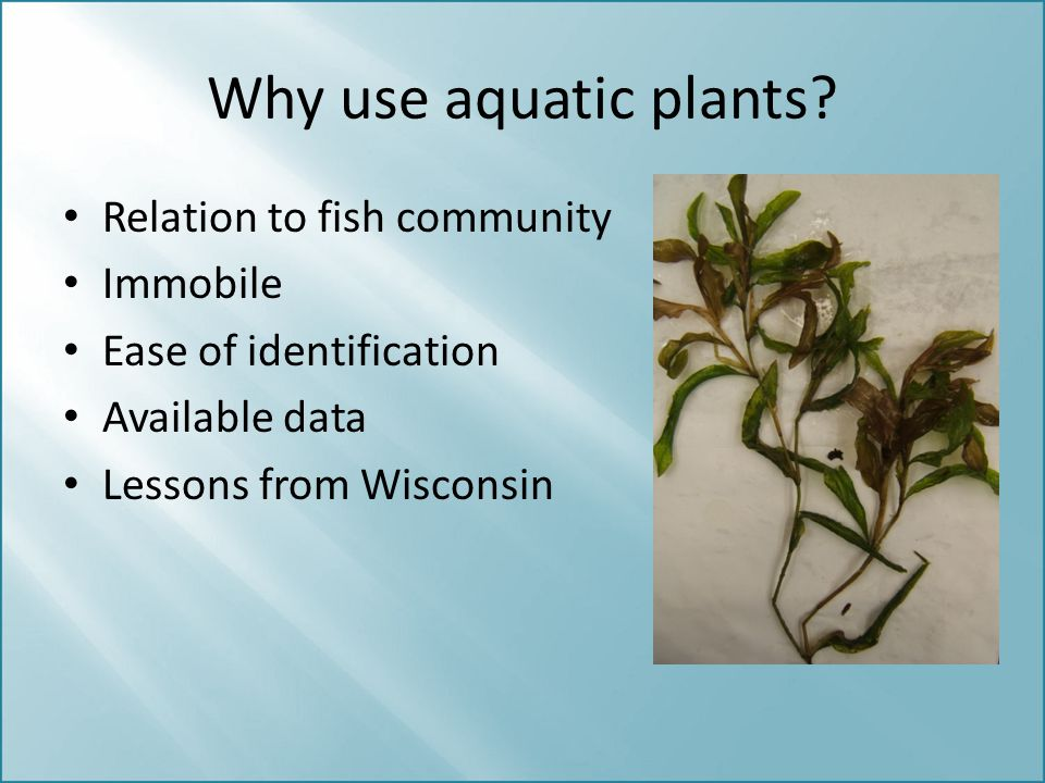 Why use aquatic plants Relation to fish community Immobile