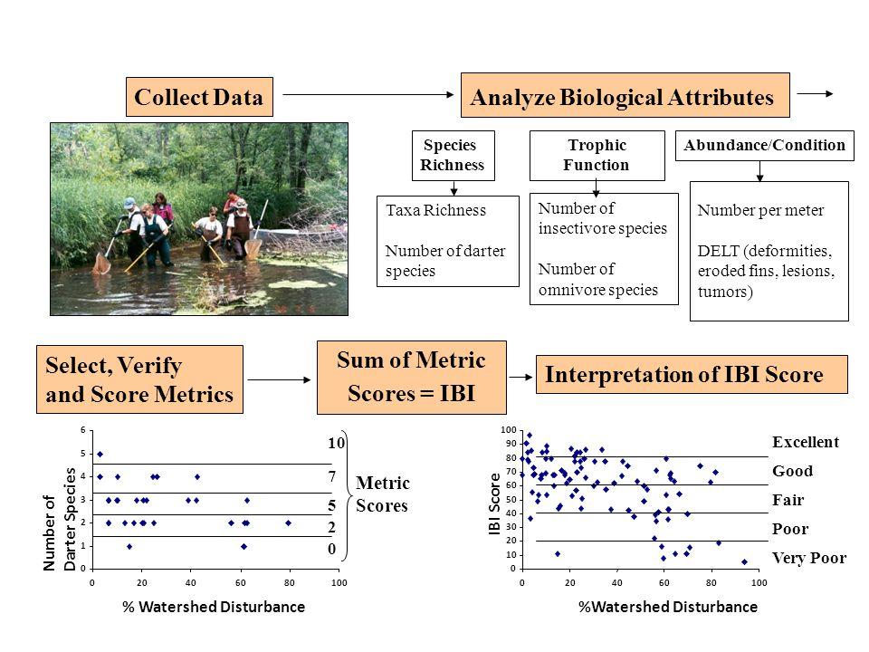 Sum of Metric Scores = IBI