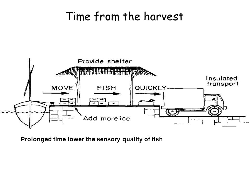 Time from the harvest Fish should reach the end consumer in minimum time.