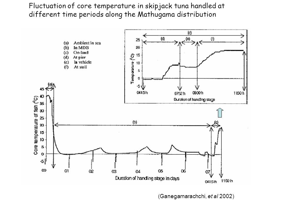 Fluctuation of core temperature in skipjack tuna handled at different time periods along the Mathugama distribution