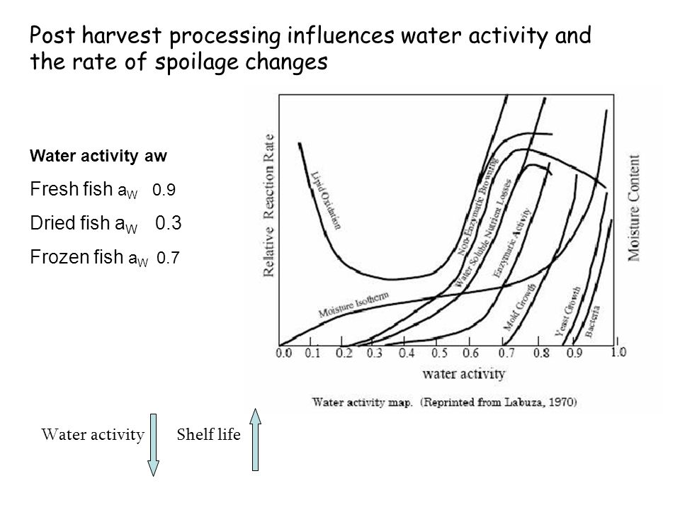 Post harvest processing influences water activity and the rate of spoilage changes