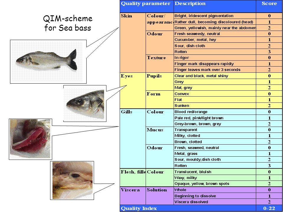 QIM-scheme for Sea bass