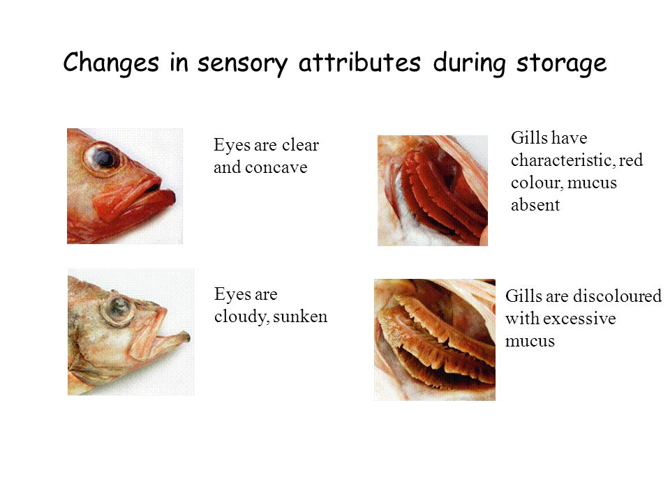 Changes in sensory attributes during storage